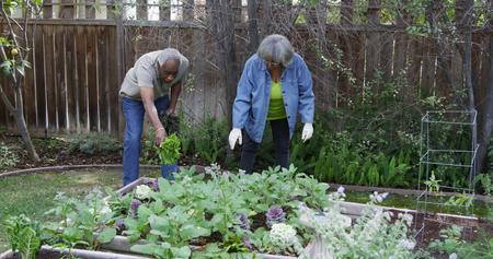 Senior black couple gardening in backyard 免版税图像