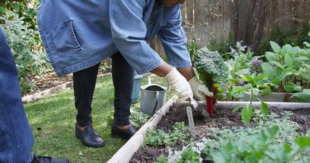 Elderly African couple working together in garden 免版税图像