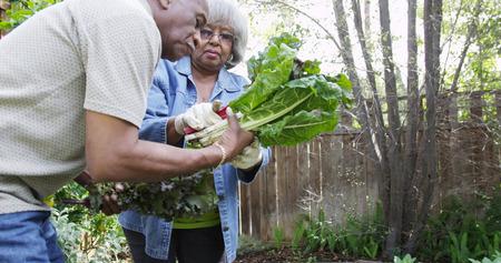 Mature black couple gardening together