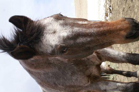 Single horse curious of camera