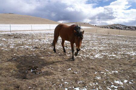 Horse standing alone in a field Reklamní fotografie