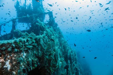 wreck: Ship wreck of the P.29.