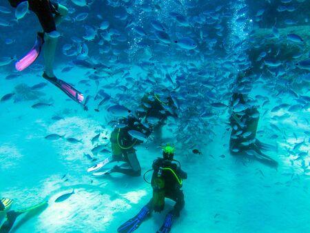 Divers feeding fish. Фото со стока