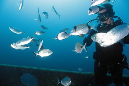 bream: Diver surrounded by bream