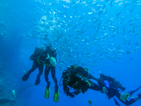 Swimming with a shoal of fish