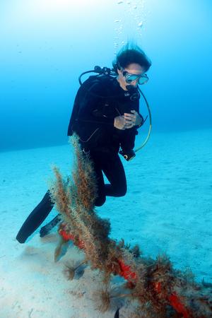 Diver and Anchor.3. Фото со стока