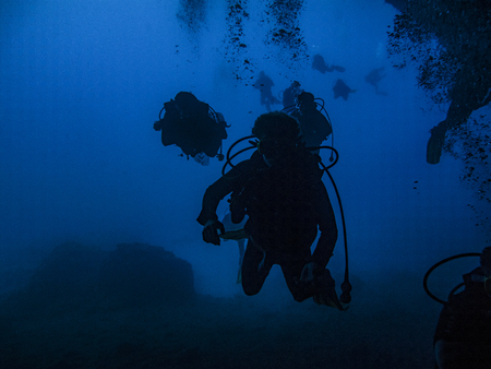 Divers silhouetted