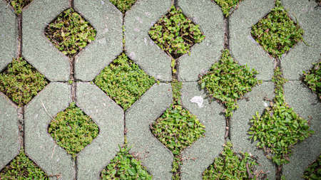 Green grass growing in brick block floors Standard-Bild