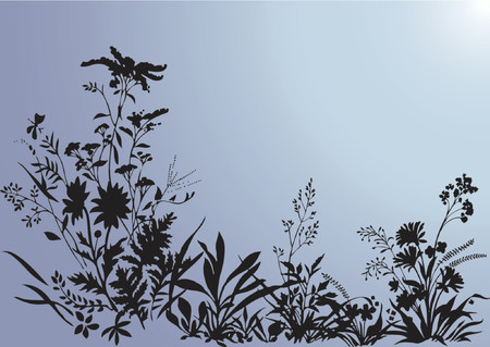 wildblumen: Plant Hintergrund - Vektor-Illustration  Illustration