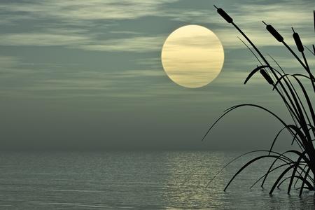 canne: Le piante acquatiche e luna piena