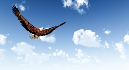 Eagle flying on a background of the  blue sky  photo