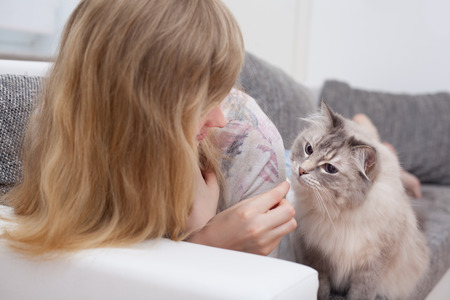dainty: young woman feeding ragdoll cat a dainty