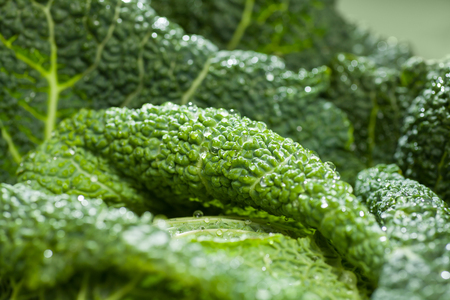 savoy cabbage vegetable leafs with fresh water drops