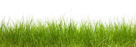 잔디 흰색 배경에 고립