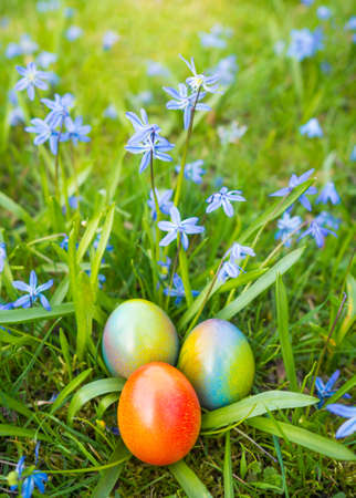 colorful easter eggs hidden between spring flowers on lawn