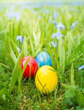 easter eggs between flowers on lawn Stock Photo