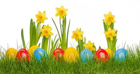 부활절 달걀과 수 선화 꽃 잔디에