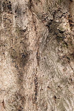 mottled: Mottled tree texture Stock Photo
