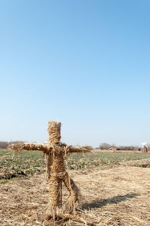 scarecrow: Scarecrow in canola flower field