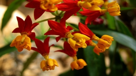 inhabits: This type of flower colorfully inhabits warm climates