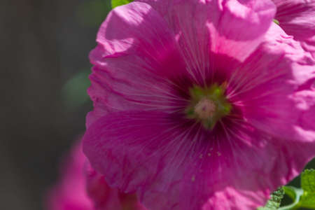 phillip rubino: Colorful and different flowers in the garden setting