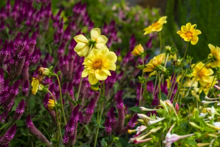 Colorful and different flowers in the garden setting