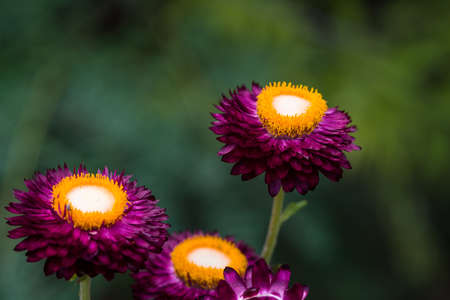 philliprubino: Colorful and different flowers in the garden setting