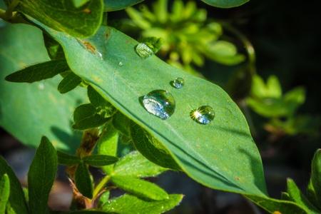 phillip rubino: Water drops on a green leaf