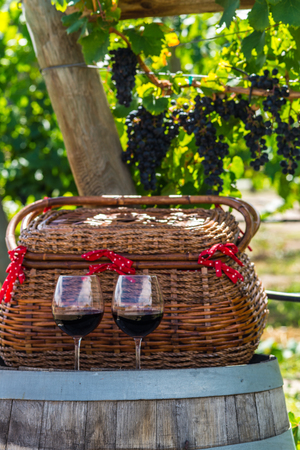 phillip rubino: Two glasses of red wine sitting on wine barrel with wicker picnic basket in front of hanging wine grapes Stock Photo