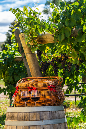 Two glasses of red wine sitting on wine barrel with wicker picnic basket in front of hanging wine grapes photo