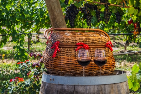 Close up  in vineyard with wicker basket and 2 glasses of red wine sitting on wine barrel photo