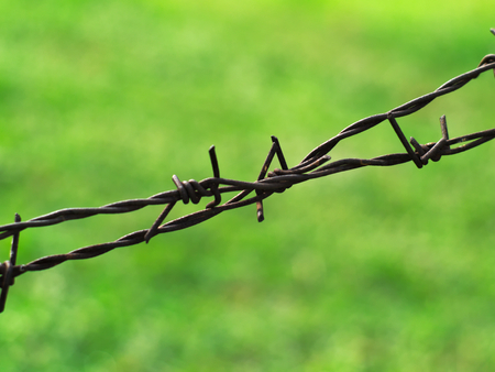 invade: rusty metal barbed wires with a lwan in the background Stock Photo