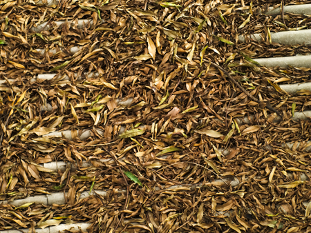 pile of leaves: pile of brown fallen leaves and branches on roof tiles