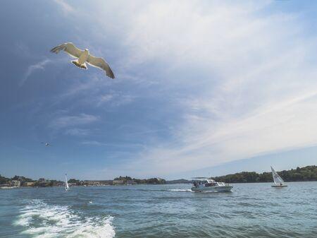 bird fly: Bird fly by boat