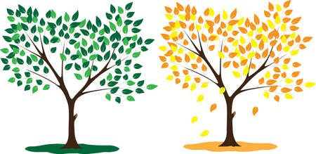 Tree seasons summer and autumn Illustration