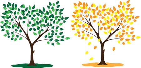 Tree seasons summer and autumn Illustration
