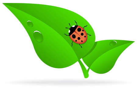 ladybug on a green leaf with dew drops Illustration