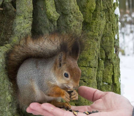 squirrel sits on a tree looking warily at the camera Stock Photo - 16325343