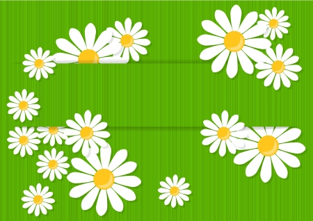 greeting card with white daisies on a green background Stock Vector - 18243899