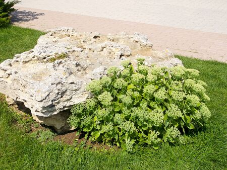 green plant on a rock on the sun-drenched green meadow Stock Photo