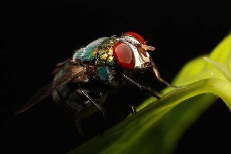 Macro photography of the compound eye of fly on black background