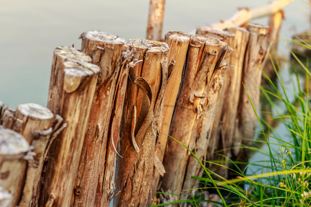 Row of timber in the edge of lagoon