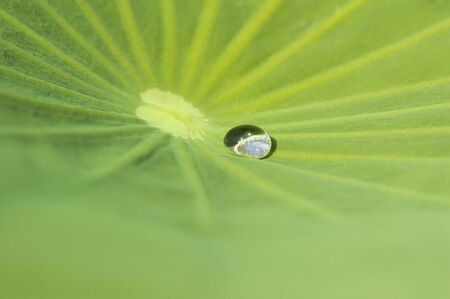 Waterdrop on a green leaf of lily. photo