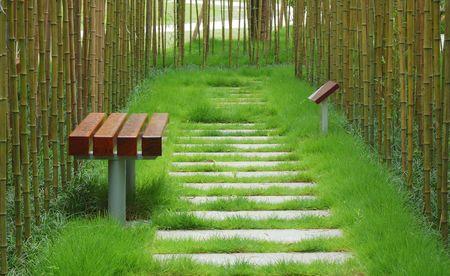 A stone walkway winding its way through a tranquil garden photo