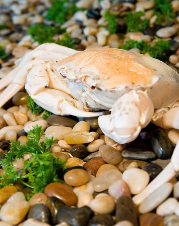 Cooked crab on small stone Stock Photo - 3705093