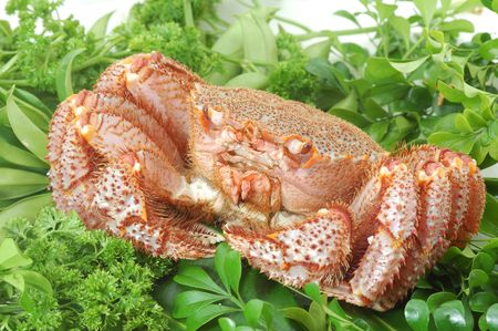 Alive Alaskan king crab  on the vegetable background in restaurant Stock Photo - 4082466