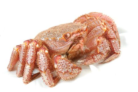 Alive Alaskan king crab  on the white table cloth in restaurant photo