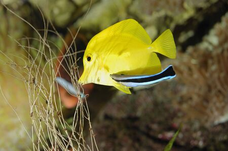 Underwater view of a butterfly fish Stock Photo - 4493801
