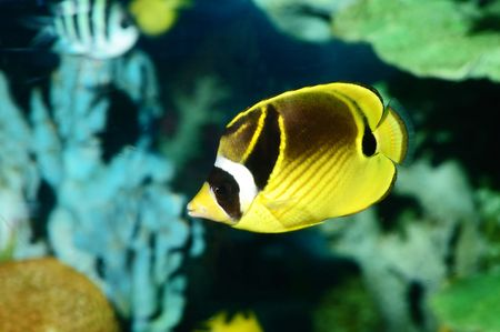 Underwater view for a butterfly fish Stock Photo - 4493803
