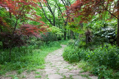 The footpath winding its way through a tranquil garden. Stock Photo - 6995308